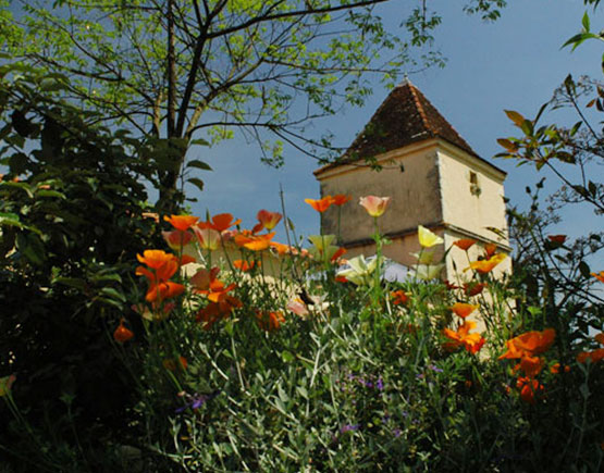 Armagnac-Domaine-de-Millet-house