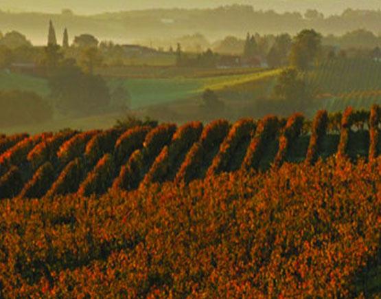 Armagnac-de-Montal-vineyard